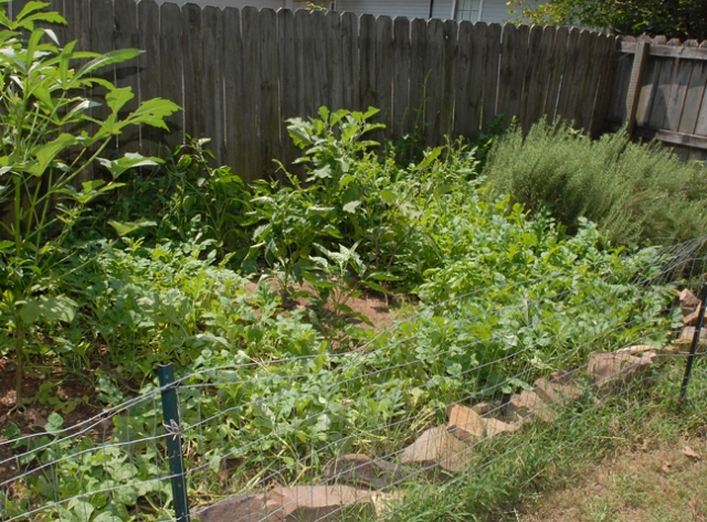 Maybe I could use watermelon for ground cover